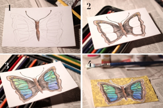 butterfly-process